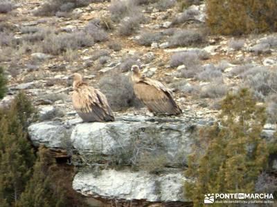 Hoces y cañones del Río Gallo - Buitres río Piedra;senderismo llanes